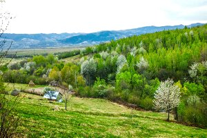 Green valley in the spring
