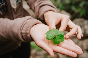 Holding a clover leave on the stretched female hand palm