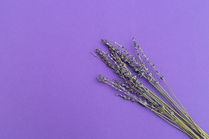 Lavender on ultra violet background