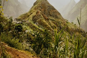 Trekking route 202 along sugarcane vegetation going across the Xo-Xo valley to Ribeira Grande. Santo Antao island, Cape Verde