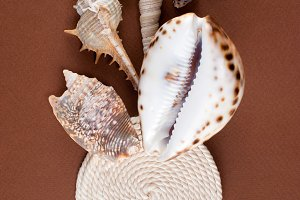 Shells on textured background