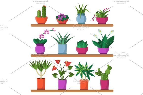 Plants In Pots On The Shelves