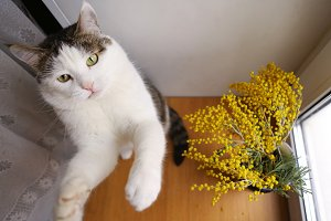 cat playing with toy mouse close up photo on windowsill with mimosa flowers