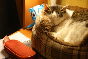 school kid desk work place with book lamp cat sleeping in catbed