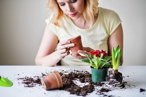Young woman planting flower seedlings at home.