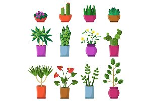 House plants in pots. vector illustrations in flat style