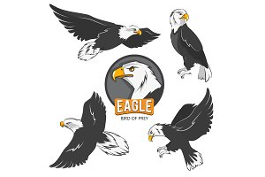 Collection of cartoon eagles. Flying birds isolate on white
