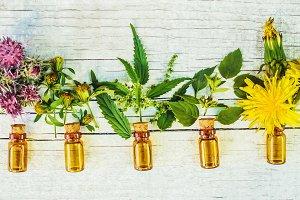 medicinal herbs. Selective focus.