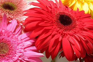 gerbera flower bouquet