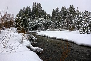 Snowy Riverbank & Forest