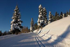 XC Skiing on a Bluebird Morning