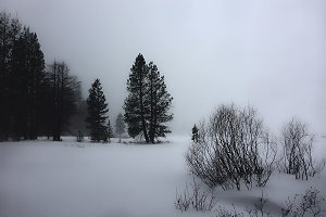 Muted Snowstorm