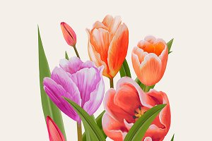 Drawing of Tulip flowers