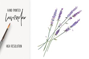 Detailed Watercolor Lavender png