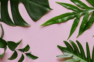 Tropical leaf on pink background