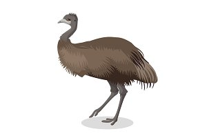 Emu bird full length portrait isolated on white background