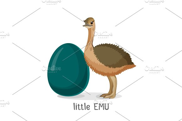 Little Emu Bird Isolated On White Background Small Chick