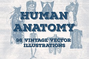96 Anatomy Vector Illustrations
