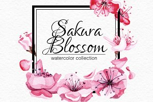 Watercolor Sakura blossom collection