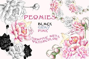Peonies.Graphics & watercolor.