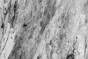 Wood Trunk Detail in Black and White