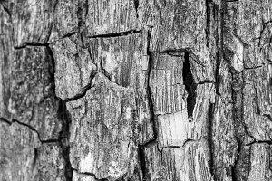 Peeled Trunk  Tree Detail