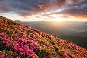 Natural summer landscape