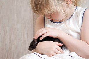 Child is holding on the hands of beloved household pet-a rat