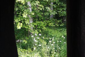 Woods through Window in Door County