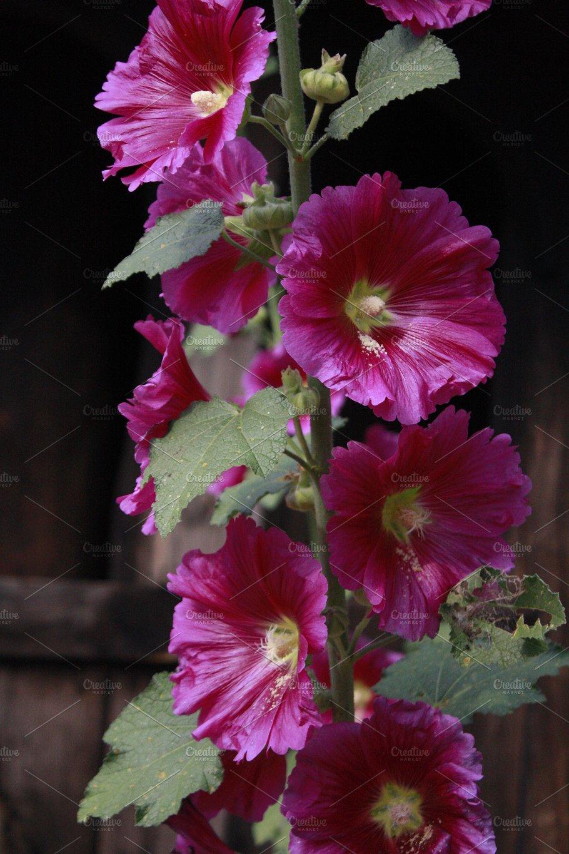 Pink Trumpet Flower in Door County - Nature