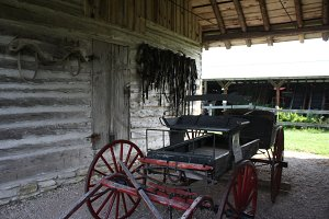 Horse Buggy in Door County