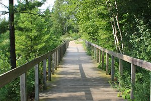 Boardwalk in Woods in Door County