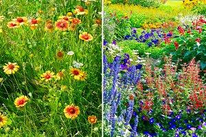 variety flowering flowers