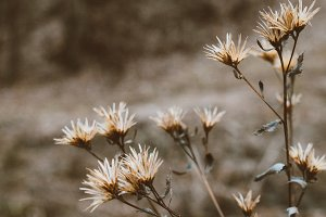Autumn thistle closeup