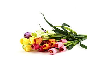 Bouquet of Fresh Multicolor Tulip