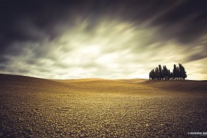Isolated cypresses in Tuscany