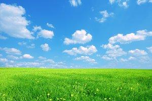 Sunny spring landscape.