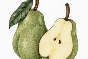 Drawing style of pear (PSD)
