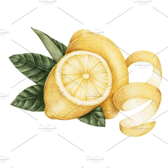 Illustration Drawing Style Of Lemon