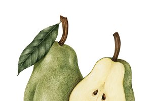 Illustration drawing style of pear