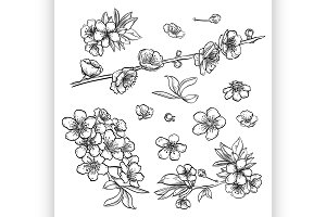 Hand drawn elegant sakura flowers