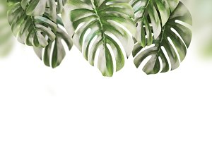 Hanging tropical leaves, isolated