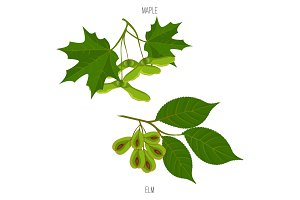 Maple and elm leaves seeds vector green acer leaf samples