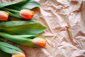 Tulip flowers on paper background