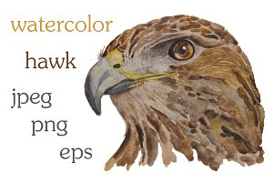 Watercolor illustration of a hawk
