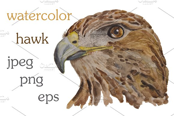 Watercolor Illustration Of A Hawk