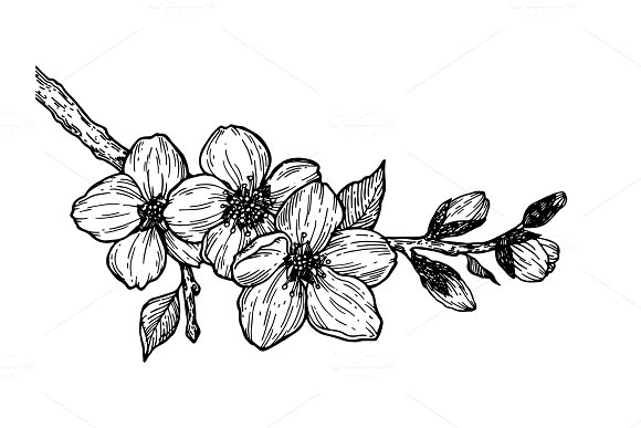 Cherry Blossom Branch Engraving Vector