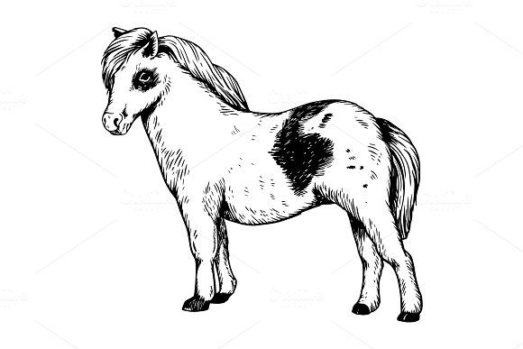 Pony Small Horse Engraving Vector