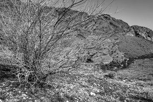 Red Rock Bush Lines