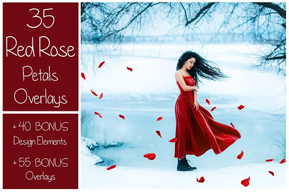 130 Red Rose Petals Overlays Png